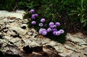 Fiori dei Monti Martani-Particolare