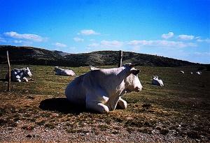 Monti Martani-Mucca