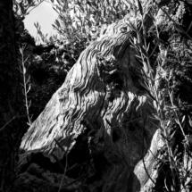 Roccia d'ulivo
